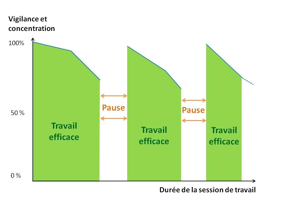 Concentration améliorée grâce aux pauses pendant les révisions